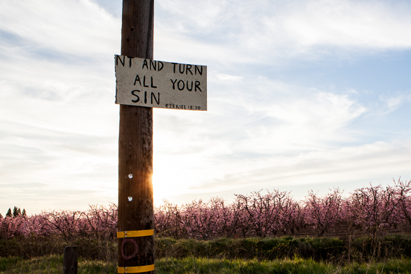 Fresno County Blossom Trail-4702