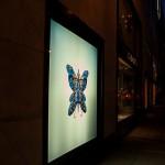 butterfly-effect-9572