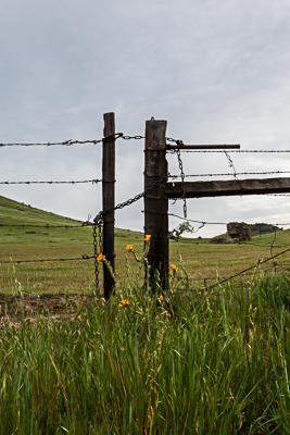 barbed wire tall-5866