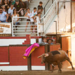 bull runs into ring